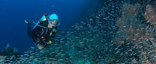 À quel âge peut-on pratiquer la plongée sous-marine ?